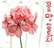 조선족불우학생돕기-꽃망울회